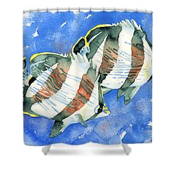 Banded Butterflyfish Shower Curtain