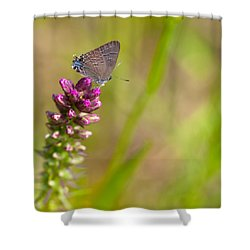 Banded Hairstreak Butterfly Shower Curtain by Melinda Fawver