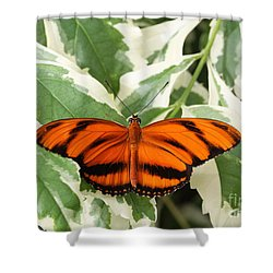 Banded Orange Longwing Butterfly Shower Curtain by Judy Whitton