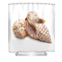 Banded Tulip Seashells Macro Shower Curtain by Jennie Marie Schell