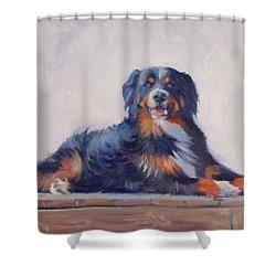 Bandit Shower Curtain by Dianne Panarelli Miller