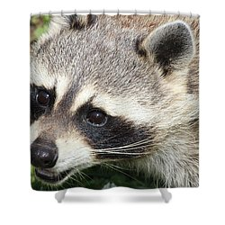 Bandit Shower Curtain by Tiffany Erdman