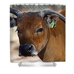 Banteng Girl Shower Curtain