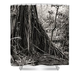 Strangler Fig And Cypress Tree Shower Curtain