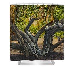 Banyan Tree Maui Shower Curtain