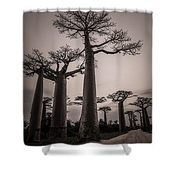 Baobab Avenue Shower Curtain