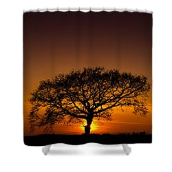 Baobab Shower Curtain