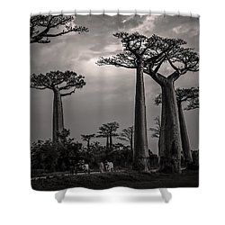 Baobab Highway Shower Curtain
