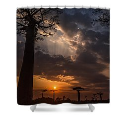 Baobab Sunrays Shower Curtain