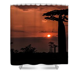Baobab Sunrise Shower Curtain