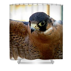 Barbary Falcon Wings Stretched Shower Curtain