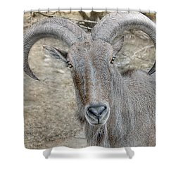 Shower Curtain featuring the photograph Barbary Sheep by Dyle   Warren
