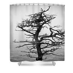 Bare Cypress Shower Curtain by Melinda Ledsome