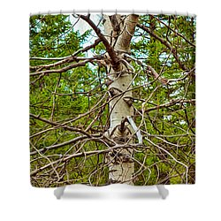 Bare Essentials Shower Curtain by Omaste Witkowski