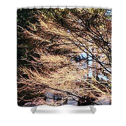 Bare Naked Branches II Shower Curtain