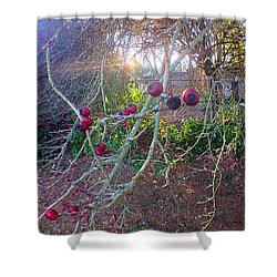 Bare Naked Branches IIi Shower Curtain
