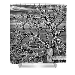 Bare Tree In Hana Shower Curtain