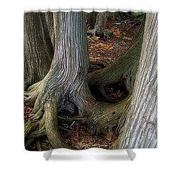 Barky Barky Trees Shower Curtain by Michelle Calkins