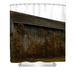 Barn 2 Shower Curtain by Andrea Anderegg