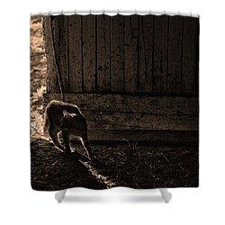 Barn Cat Shower Curtain