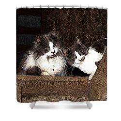 Barn Cats Shower Curtain