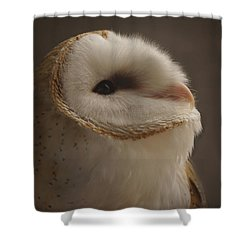 Barn Owl 4 Shower Curtain