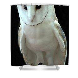 Barn Owl. Shower Curtain by Kathleen Struckle