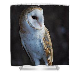Barn Owl Shower Curtain by Sharon Elliott