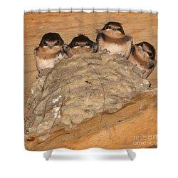 Barn Swallow Chicks 2 Shower Curtain