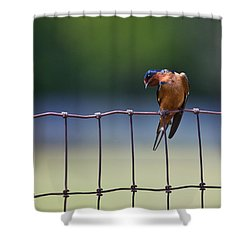 Barn Swallow Shower Curtain by Mark Alder