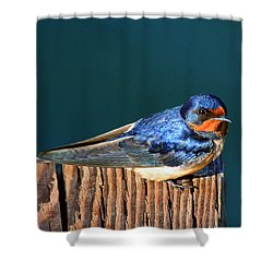 Barn Swallow Perching Shower Curtain by Bob and Jan Shriner