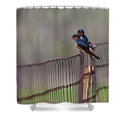 Barn Swallows On The Fence Shower Curtain by Mark Alder
