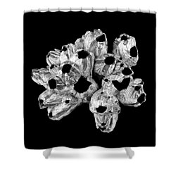 Barnacle Shell Shower Curtain
