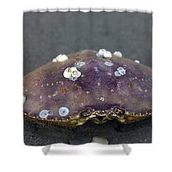 Barnacled Crab Shell Shower Curtain