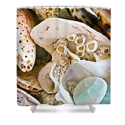 Barnacles And Shells Shower Curtain by Colleen Kammerer