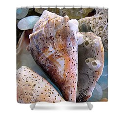 Barnacles Shower Curtain by Colleen Kammerer