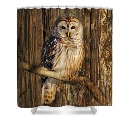 Barred Owl 1 Shower Curtain