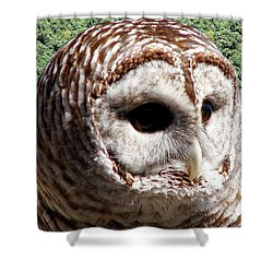 Barred Owl 2 Shower Curtain by Rose Santuci-Sofranko
