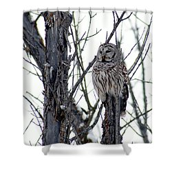 Barred Owl 2 Shower Curtain