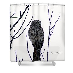 Barred Owl 3  Shower Curtain