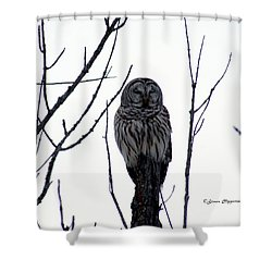 Barred Owl 4 Shower Curtain
