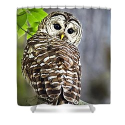 Shower Curtain featuring the photograph Barred Owl by Christina Rollo