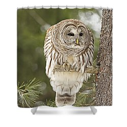 Barred Owl Hunting Shower Curtain