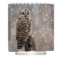 Barred Owl In A New England Snow Storm Shower Curtain by John Vose