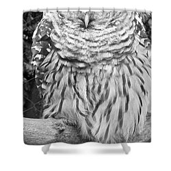 Shower Curtain featuring the photograph Barred Owl In Black And White by John Telfer