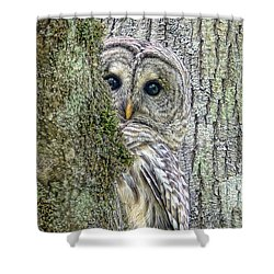 Barred Owl Peek A Boo Shower Curtain