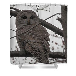 Shower Curtain featuring the photograph Barred Owl Perched by Emmy Marie Vickers