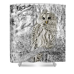 Barred Owl Snowy Day In The Forest Shower Curtain