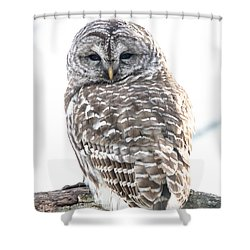 Barred Owl2 Shower Curtain by Cheryl Baxter
