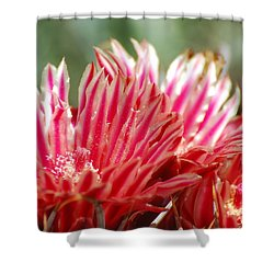 Barrel Cactus Flower Shower Curtain
